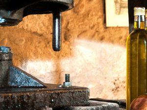 Mitos y leyendas sobre el aceite de oliva