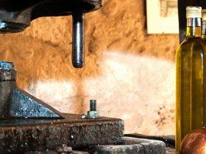 Valores nutricionales aceite de oliva