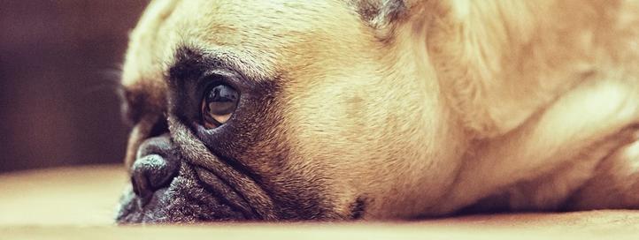 Beneficios del aceite de oliva en perros