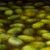 Atributos negativos de aceite de oliva