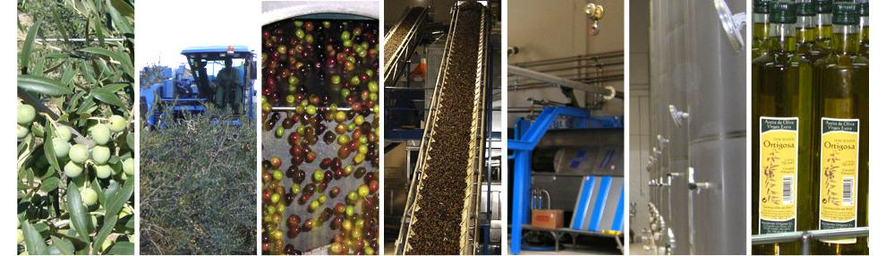 Process : Hacienda Ortigosa Oil Press